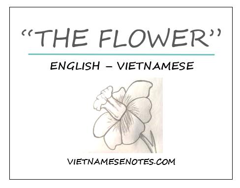 """The Flower"""